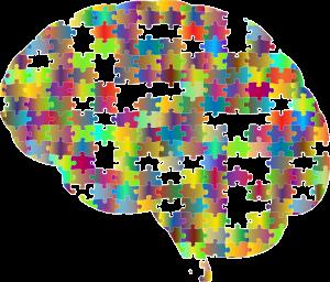 Gehirn, Wissensnetz